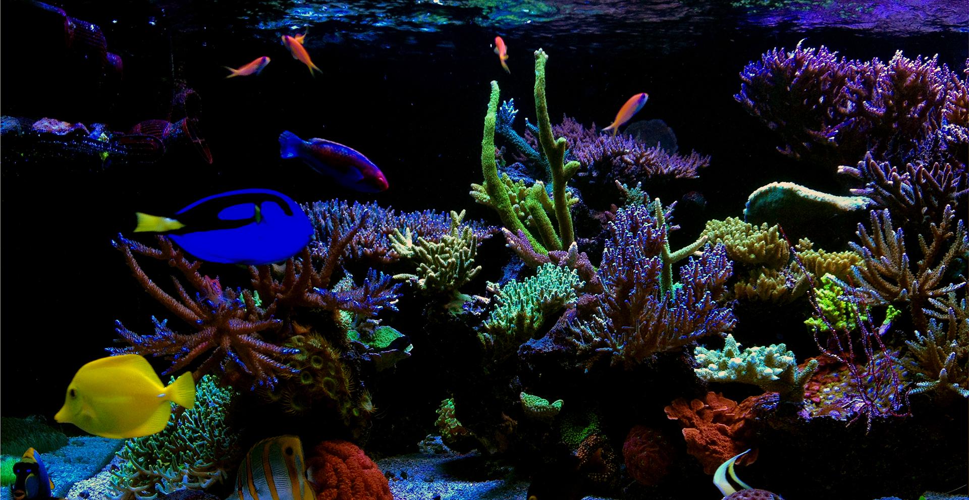 Reef Aquarium Background
