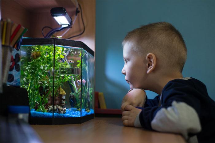 Boy staring at aquarium
